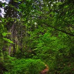 100 Aker Woods (North Cascade National Park) thumbnail