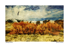Eagle, Mountains, Willows ~ Original Poem by Photographer (Johnrw1491) Tags: poem poetry art history impressionism mountains willows grasses painting clouds eagle flight soaring tbird landscape textures