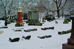 Graceland 14 (cbillups) Tags: gracelandcemetery charliebillupschicago cemetery chicago