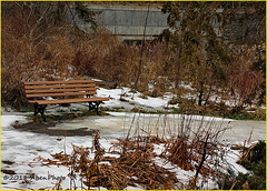 180128 Edwards Gardens (41) (Aben on the Move) Tags: edwardsgardens toronto ontario canada park nature outdoors winter cold trees landscape