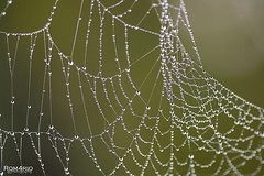 Spider web (Rom4rio Photography) Tags: nikon nikkor nikond3100 nature 105mmf28 outdoor bokeh
