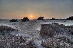 Nationaal Park de Hoge Veluwe_tonemapped (Rudaki1959) Tags: walking walk winter wideangle woods earthnaturelife explore outdoors plants a7m2 skies dagje forest landscape hdr netherlands natuurmonumenten nature natural m