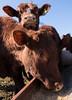 20180221-OSEC-LSC-0705 (USDAgov) Tags: usda departmentofagriculture usdepartmentofagriculture chesapeakebayfoundation clagettfarm agriculturaloutlookforum aof farmconservationtour maryland uppermarlboro conservation soil