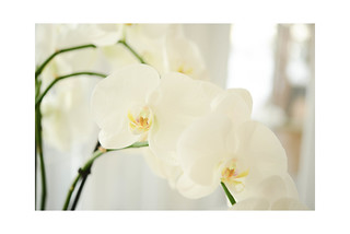 Just in case .... I love orchids ; )