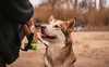 Alaskan Malamute (36D VIEW) Tags: tamron 45mm mirrorless sony a7rii a7 alpha beach dogs malamute alaskan