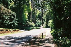 Mount Dandenong Tourist Road.....again (Matthew Paul Argall) Tags: beirettevsn manualfocus guessfocusing road street mountdandenongtouristroad mountdandenong fujicolor100 100speedfilm 100isofilm yarraranges untouchedandunedited