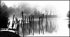 Cohansey Dock Posts (JBayPhotographie) Tags: river nature posts dock reflection reflect snow ice fog mist cloudy black white mood light