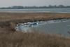 Zeldzaam Hollands winterplaatje: ijszeilen op Gouwzee (Roelie Wilms) Tags: gouwzee monnickendam ijszeilen ice ijs winter noordholland nederland