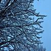 Frozen / Ghiacciato (Giorgio Ghezzi) Tags: snow neve tree albero branch ramo giorgioghezzi