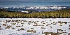 (Ignacio Ferre) Tags: madrid sierradeguadarrama españa spain paisaje landscape panorama nikon nieve snow montaña mountain bosque forest puertodelamorcuera