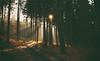 Im Wiehengebirge (SurfacePics) Tags: badessen altkreiswittlage landkreisosnabrück lkos niedersachsen lowersaxony deutschland germany europa europe wald wiehengebirge forest bäume baum tree trees nature natur landscape landschaft sonne sonnenuntergang sundwoner sun sunlight sunset sunny mystic 2009 januar hiking idylle nice amazing stunning sonyalpha sonyalpha100 photo photography foto fotografie surfacepics