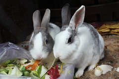 Together (.::RMT::.) Tags: rabbit eat together hare bunny vegetarian cute love