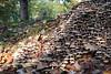 Mushrooms (karvainen kana) Tags: mushrooms lots many loads autumn stump nature