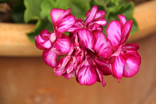 Nice flower..