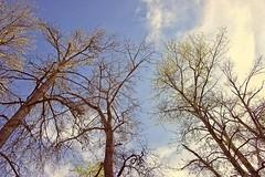 Tree tops (JSB PHOTOGRAPHS) Tags: jsb0614 trees d600 nikon 28300mm bluesky clouds on1photoraw