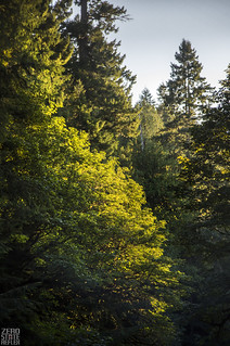 Washington_Sol Duc_Camping Forest_Trees