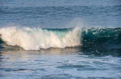 2018-Jan-California-1034 (4x4Foto) Tags: 2018 bigsur california deetjensrestaurant emeraldbay january montereybay pacificcoasthighway pacificgrove pacificocean southlaketahoe flowers ocean plants rocks sunset sunshine surf surfing travel trees waves virginia unitedstates