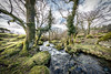 Edge of Burrator Reservoir - Dartmoor (pm69photography.uk) Tags: burratorreservoir burrator voigtlander voigtlanderheliarf56 voigtlanderheliar10mmf56 wideangle ultrawide trees tree river aurorahdr2018 sony spooky sonya7rii 10mm ilce7rm2 ilovedevon dartmoor devon