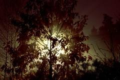 laterna magica (stempel*) Tags: polska poland polen polonia gambezia pentax k30 sadebudy night noc long exposure tree light światło drzewo laterna magica