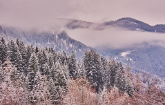 Wintertime (flowerikka) Tags: bäume clouds dolomiten dolomites fog gebirge italien landscape mist mountains nature nikon season sky trees view wald winter winterlandschaft wintertime snow