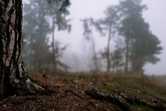 So far away from you (mripp) Tags: art vintage retro old bavaria bayern forest wald nature natur leica 1 oberpfalz