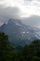 2014.06.20.140 GRINDELWALD - l'Eiger (3970m) (alainmichot93 (Bonjour à tous - Hello everyone)) Tags: 2014 suisse schweiz svizzera europe cantondeberne grindelwald alpesbernoises montagne sommet eiger arbre forêt neige ciel nuages