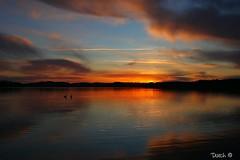 Serenity. (Dutch in Denmark) Tags: lake sunrise swans denmark fussingøsø
