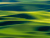 Mid Length Hair Ombre (devin176) Tags: abstract agriculture america colfax color farmland fineartphotos green impressionistart interiordesignart jasonwrambo land landscape landscapephotography light nature naturephotography palouse palouseregion parks photoart phototype scenic shadows sidelight spring statepark steptoebutte sun sundown sunlight sunset unitedstates visionsofinspirationllc washington wheat wheatfields whitmancounty