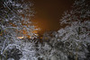 Winter Magic (m.a.r.c.i) Tags: fujifilm xe3 samyang12mmf20 stuttgart badenwürttemberg rotenberg württemberg germany marci stuttgartrotenberg nebel mist herbst winter snow schnee bäume wald nightshot