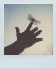 We fly (Maija Karisma) Tags: polaroid instant pola littlebitbetterscan sx70 color600 impossible nature