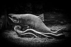Conuma River Fish Hatchery (MIKOFOX ⌘ Thanks 4 Your Faves!) Tags: canada sculpture salmon xt2 learnfromexif monochrome july landscape provia bw blackandwhite fujifilmxt2 mikofox showyourexif art xf18135mmf3556rlmoiswr