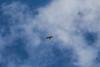 sunday flying (timp37) Tags: bird hawk lake katherine illinois palos february 2018