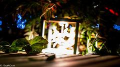 (RaphCass) Tags: lumière cube light flower plant plante vert green nikond3200france2018raphcasscentreindreetloire