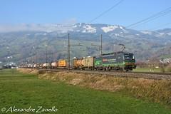 BR 193 257, Steinen (CH) (Alexandre Zanello) Tags: vectron br193 ell european locomotives leasing sbb cff ffs cargo international siemens steinen seewen gotthardbahn gotthard gothard gottardo