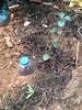 Alta tecnologia no pinhal (aulasdeviolino) Tags: regaautomatica carrasco azinheira quercusrotundifolia