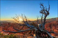 Bryce Canyon (jeanny mueller) Tags: usa southwest utah nationalpark hoodoo redrock tree sunrise landscape morning bryce brycecanyon
