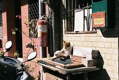 (YL.H) Tags: 台北 貓 底片 taiwan taipei canon cat film analog agfa 500n 大稻埕