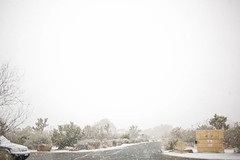 Snow in Joshua Tree (Camille Aligue) Tags: joshuatree snow desert nationalpark beauty