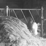 Dairy farm thumbnail