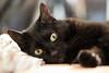 Lilli (rengawfalo) Tags: lilli katze cat eyes augen schwarz black animal pet tier haustier
