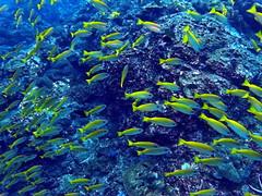Fish (markb120) Tags: sea ocean water underwater diving scuba coral reef fish animal fauna
