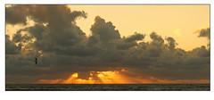 Il y a des jours comme ça -  There are days like that (diaph76) Tags: extérieur paysage landscape france ciel sky nuages clouds normandie seinemaritime lehavre coucherdesoleil sunset mouettes seagulls mer sea eaudemer seawater horizon oiseau bird