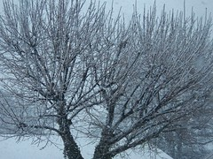 experiencing thundersnow now (MissyPenny) Tags: snow noreaster thundersnow whiteout wetsnow buckscounty bristolpennsylvania usa northeast march