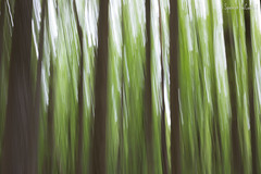 Abstract Forest. (SpencerTheCookePhotography) Tags: