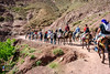 _DSC7411 (Miki Badt) Tags: imlil morocco mules