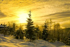 When you want to stop time and just enjoy the light. (evakongshavn) Tags: sunshine fog mist sun goldenscape light golden yellow scenery landscapephotography landscape landschaft paysage natur nature snow hivernal hiver winter winterwonderland winterwald winterlandscape wonderlandscape