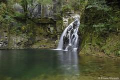 Nunobiki Taki Fall (eliseteshiraishi) Tags: nabarishi mieken japão akame waterfalls akame48waterfalls cachoeira pedra água rio paisagem madeira grama árvore natural