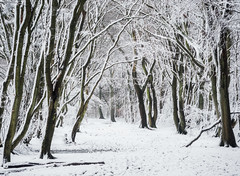 * (Damian_Ward) Tags: ©damianward damianward trees chilterns chilternhills thechilterns fog mist wood forest woodland snow winter cold