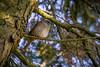 Dunnock (peterchilds93) Tags: dunnock claws feather sat perch sony a6000