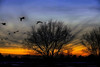 Early Arrivals (Brian 104) Tags: sunset silhouettes trees geese birds clouds